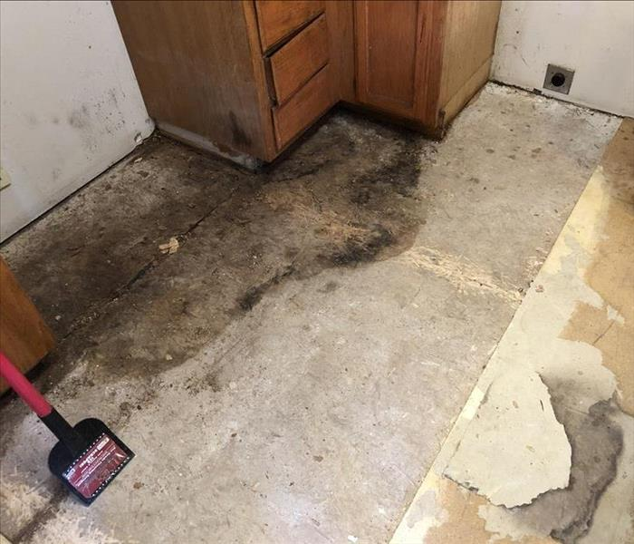 mold damaged on floor